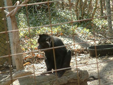 Garden City Zoo Animals Animals At Kansas City Zoo Flickr Photo