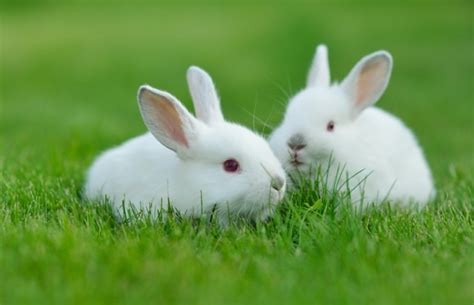 how to get rid of rabbits in your backyard how to keep rabbits out of your lawn or garden 7 ways garden mandy