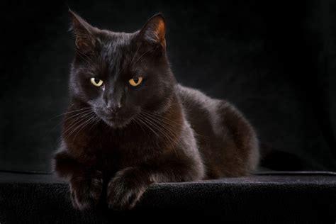 do black cats bring bad luck wonderopolis