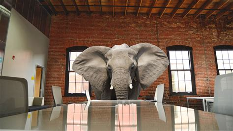 elephant in the room best of elephant in the room plan home gallery image and wallpaper