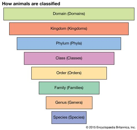 classification chart animal kingdom classification chart for www imgkid