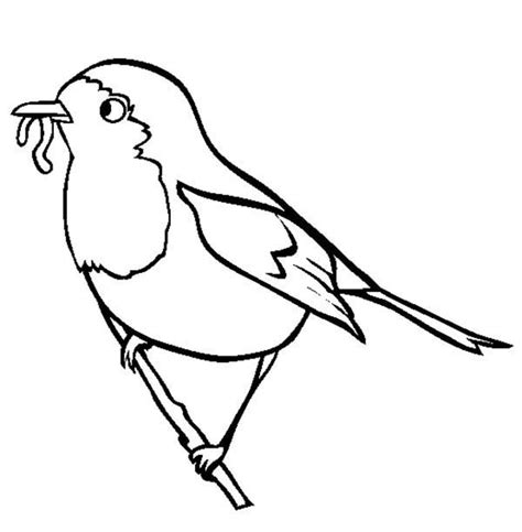 coloring page of a robin bird robin bird eat worm coloring page color luna