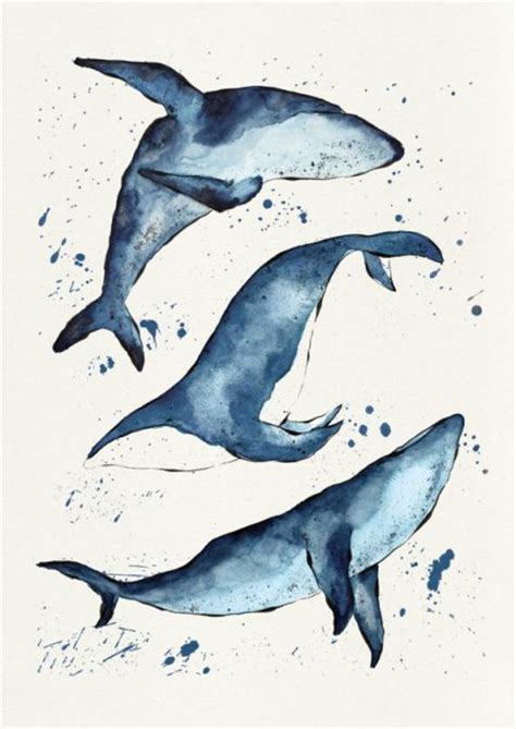 Animal Whale Signed Numbered - whales signed print jam prints