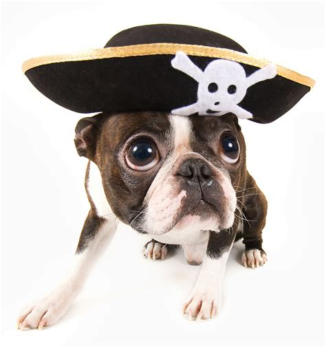 pirate puppy pets photo contest win 1 000 for a favorite animal shelter