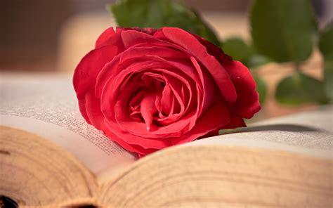 libro the rose rose on book wallpaper hd wallpaper wallpaperlepi