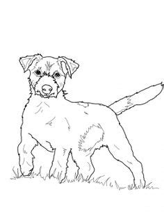 Jack Russell Terrier Coloring Pages at GetColorings.com