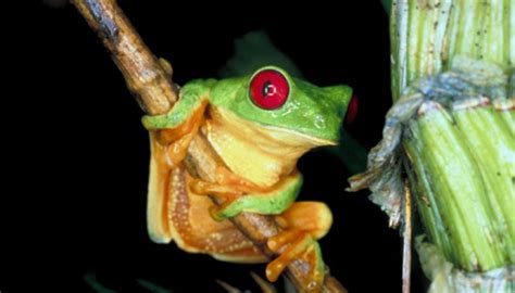 animals and plants that live in the tropical rainforest tropical forest adaptations of plants animals