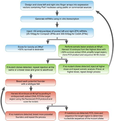 step by step flowchart flowchart of step by step experimental procedures for