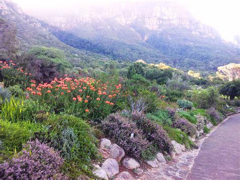 Cape Town Botanical Gardens File Kirstenbosch Botanical Garden Fynbos Cape Town Jpg
