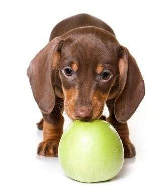apples ok for dogs fruits that are safe for dogs to eat