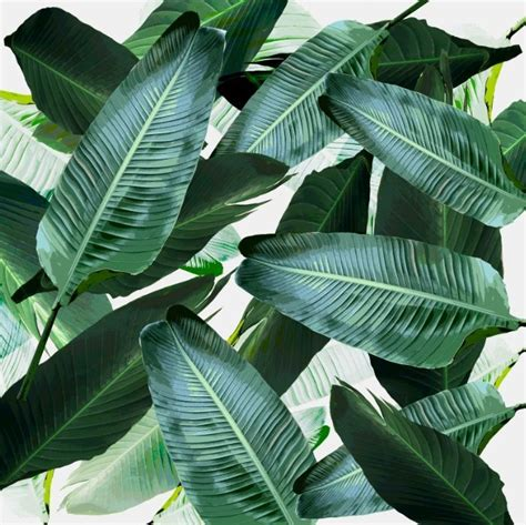 banana palm wallpaper related image sunday afternoon pinterest plants