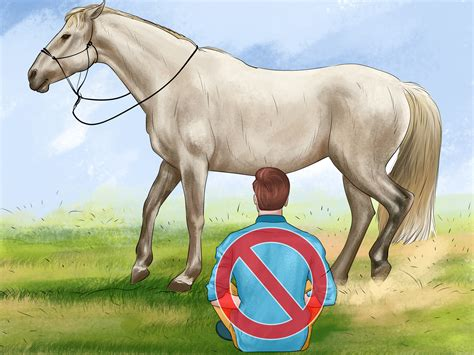 an horse how to groom a horse 13 steps with pictures wikihow