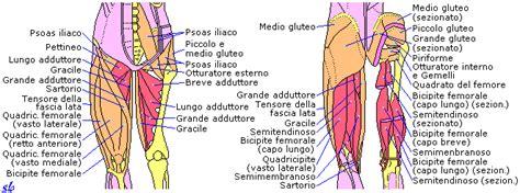 dolore interno coscia sinistra allenamento muscoli posteriori cosce