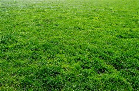 green grass landscaping green grass free stock photo domain pictures