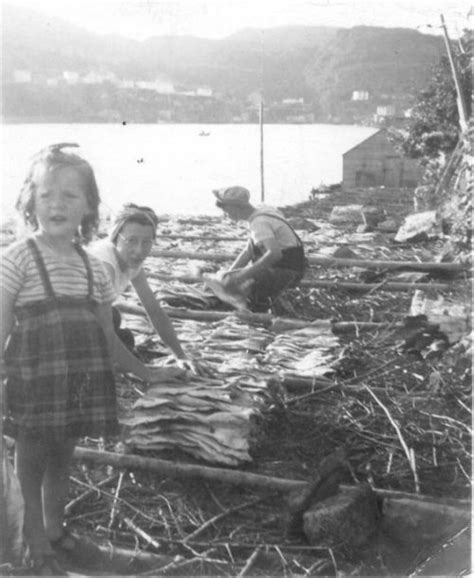 Reg Miller, Phyllis Miller and Ruby Miller spreading fish ...