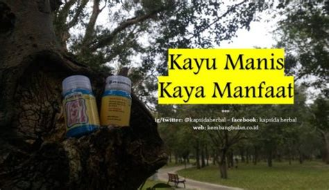 Obat Herbal Kapsida kapsida bahan herbal kembang bulan