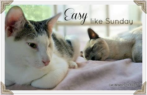 A Cat On A Sunday by Great Cat Quotes Quotesgram