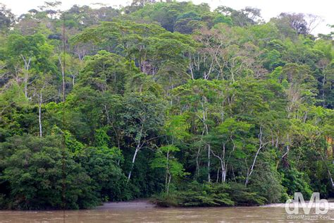rainforest sections ecuador worldwide destination photography insights