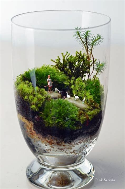 aktivkohle terrarium moss terrarium with and geese in miniature apothecary