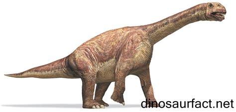 Fossil De Cuerto camarasaurus dinosaur
