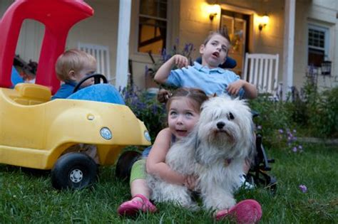 are havanese with children dogs for children with allergies akc havanese puppies