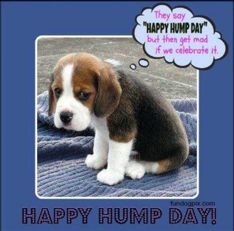 Wednesday Hump Day Meme - wednesday hump day meme
