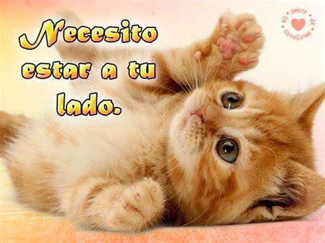 imagenes tiernas de gatitos con frases de amor im 225 genes para descargar gratis de gatitos con frases