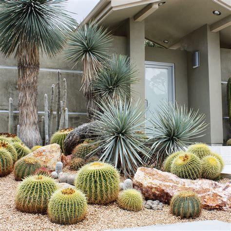 decorare il giardino decorare il giardino con cactus e piante grasse 15 idee a