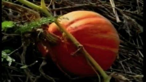 il giardino di emilia hazelip il giardino di emilia hazelip 1di3 in italiano
