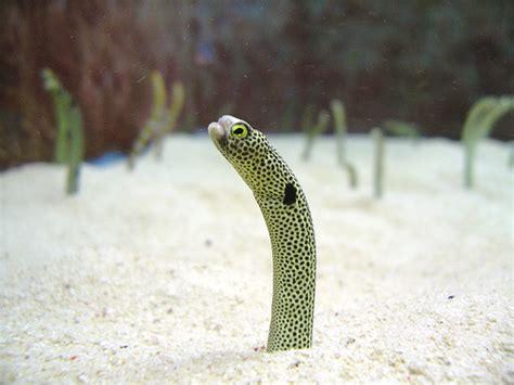 Garden Eels by The Disappearing Garden Eel