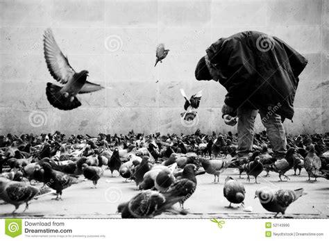 alimentazione piccioni indigente nei piccioni d alimentazione di parigi immagine