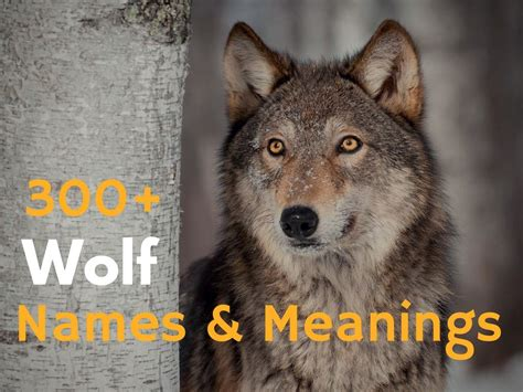 wolf names 300 wolf names and meanings hubpages