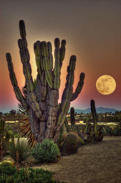 cactus garden balboa park surreal moonscape san diego california by artypixall luna