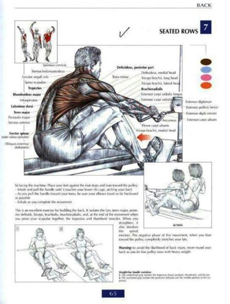 562 best anatomy and physiology images on human physical therapy and human anatomy