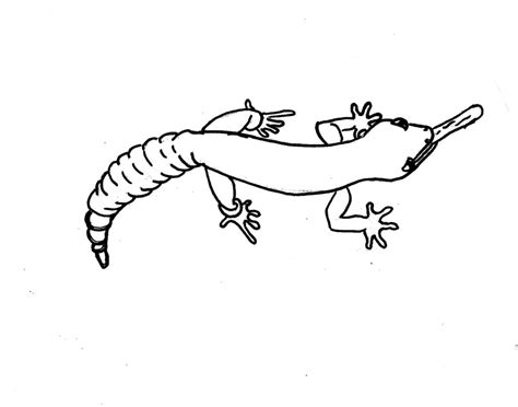 cute gecko coloring pages kids coloring leopard gecko coloring page leo color 3 full