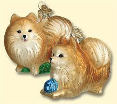 pomeranian glass ornament 1215 best pomeranian appreciation images on beautiful and photography