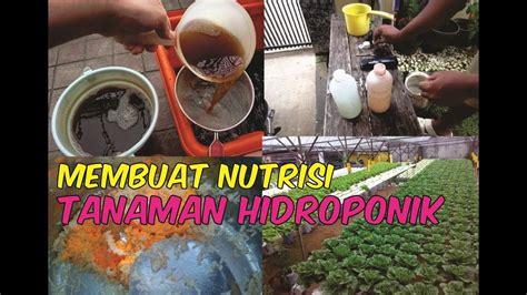 membuat nutrisi hidroponik cara membuat nutrisi tanaman hidroponik menggunakan nasi