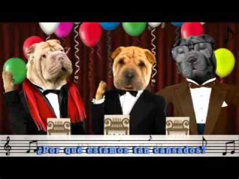 imagenes graciosas de cumpleaños de perros feliz cumplea 241 os perros youtube