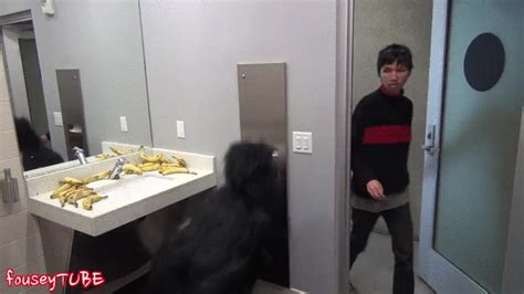 sex at the bathroom gorilla gif find share on giphy