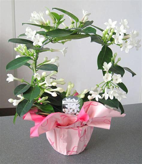 schöne große zimmerpflanzen pflegeleichte zimmerpflanzen 18 vorschl 228 ge archzine net