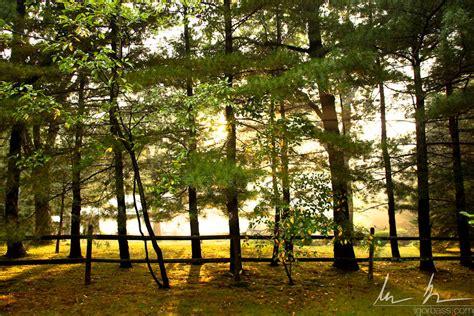 tree shop white plains trees in white plains ny by kaitou ace on deviantart