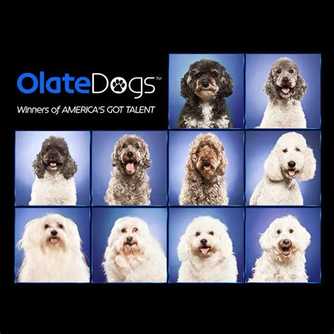 olate dogs olate dogs winners of america s got talent fuzion entertainment fuzion