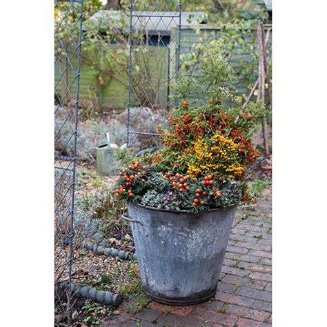 giardini idee da copiare fiori in inverno 35 idee da copiare casa design