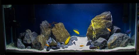 mbuna aquascape 12 best images about african cichlids on pinterest lakes