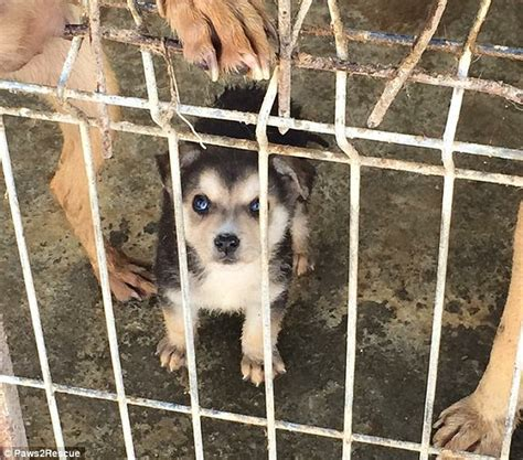 thousands  abused dogs rescued  romania  uks