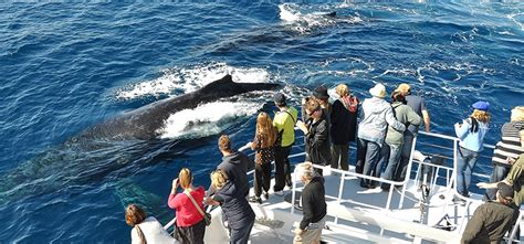 bay boats redcliffe contact number sunshine coast whale watch tours