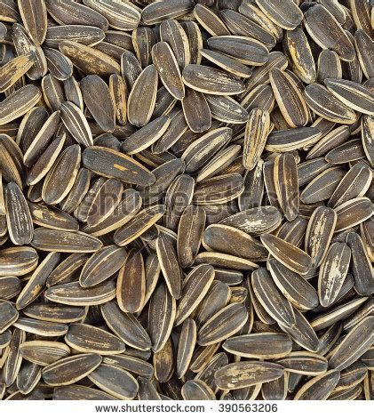 organic black sunflower seeds for chickens sunflower seeds roasted background stock photo 281539319