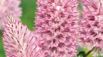 heat resistant plants heat tolerant flowers garden rescue pinterest