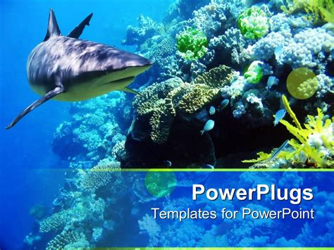 Powerpoint Template Underwater Coral Reef Ocean With Shark And Small Fish 17382 Coral Reef Powerpoint Template Free
