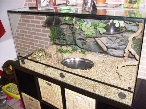 terrarium pour tortue terrestre